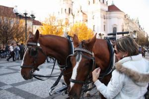 Praha – Staré Město Jilská ulice